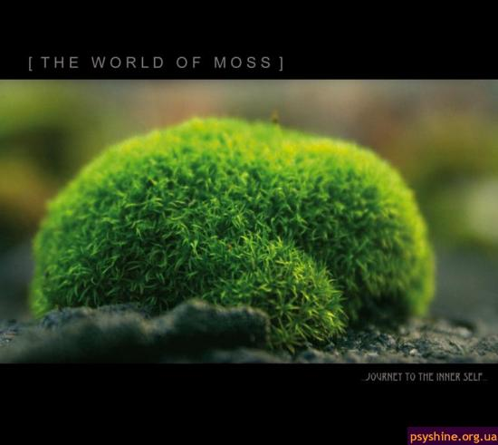 The World Of Moss..